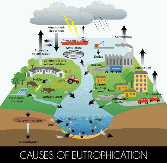 causesofeutrophication